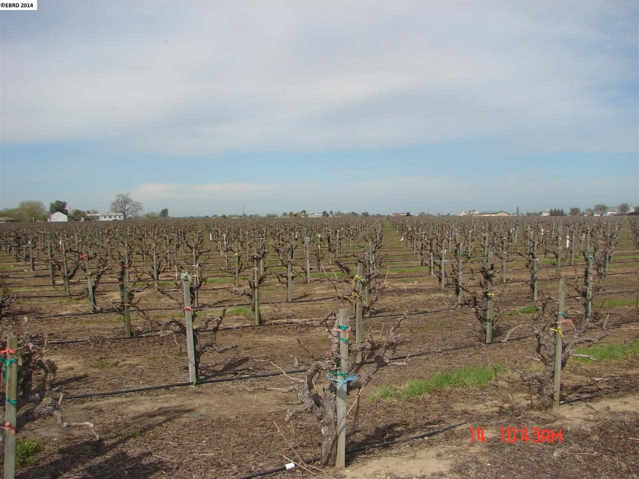 Terrain pour l Vente à 2600 TULE Lane Knightsen, Californie 94548 États-Unis